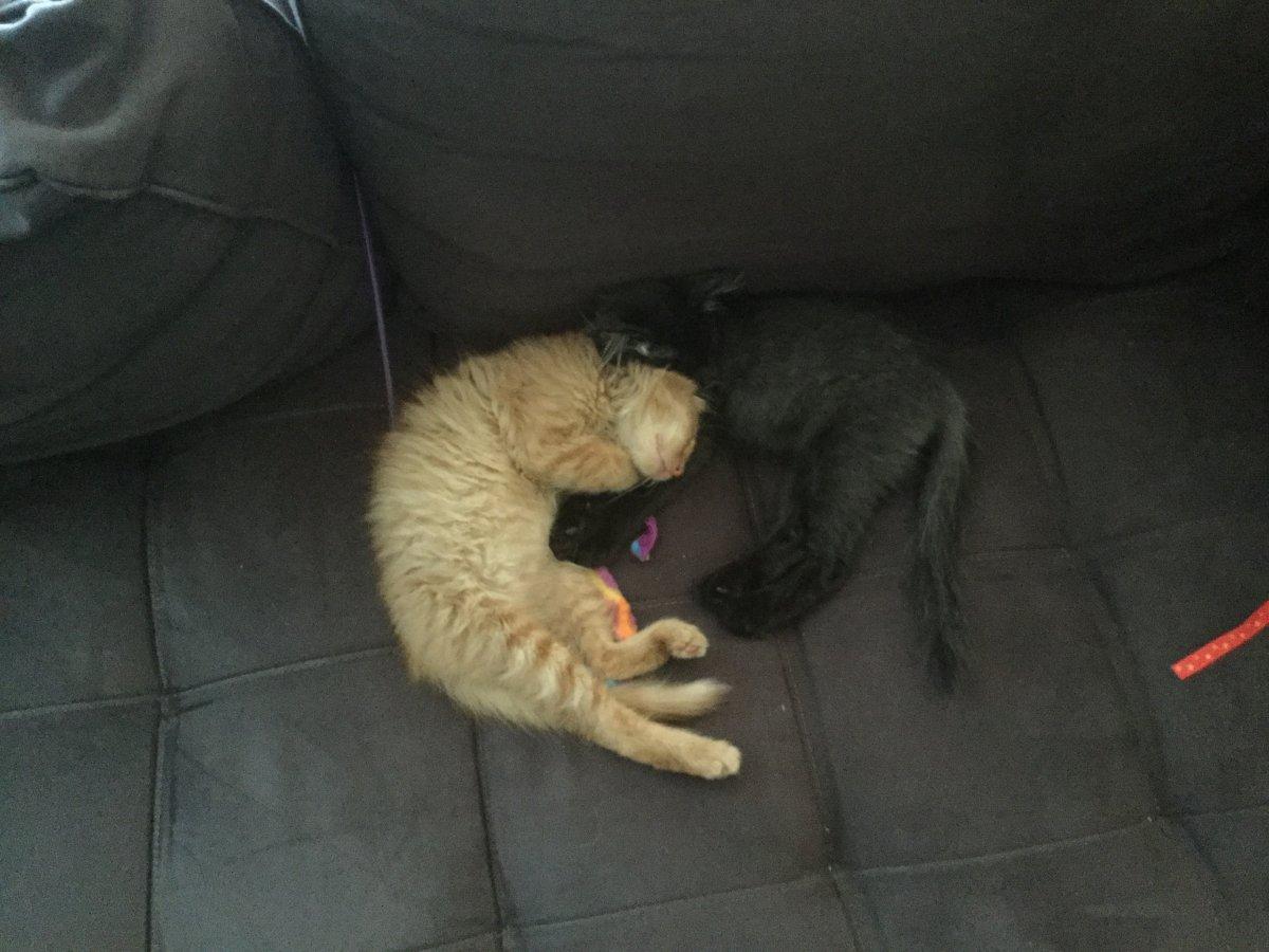 Kitten July 2017.JPG