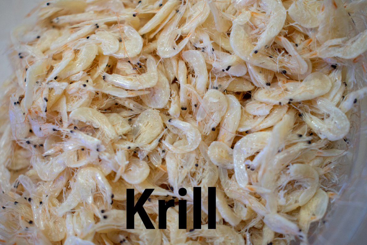 krill.png