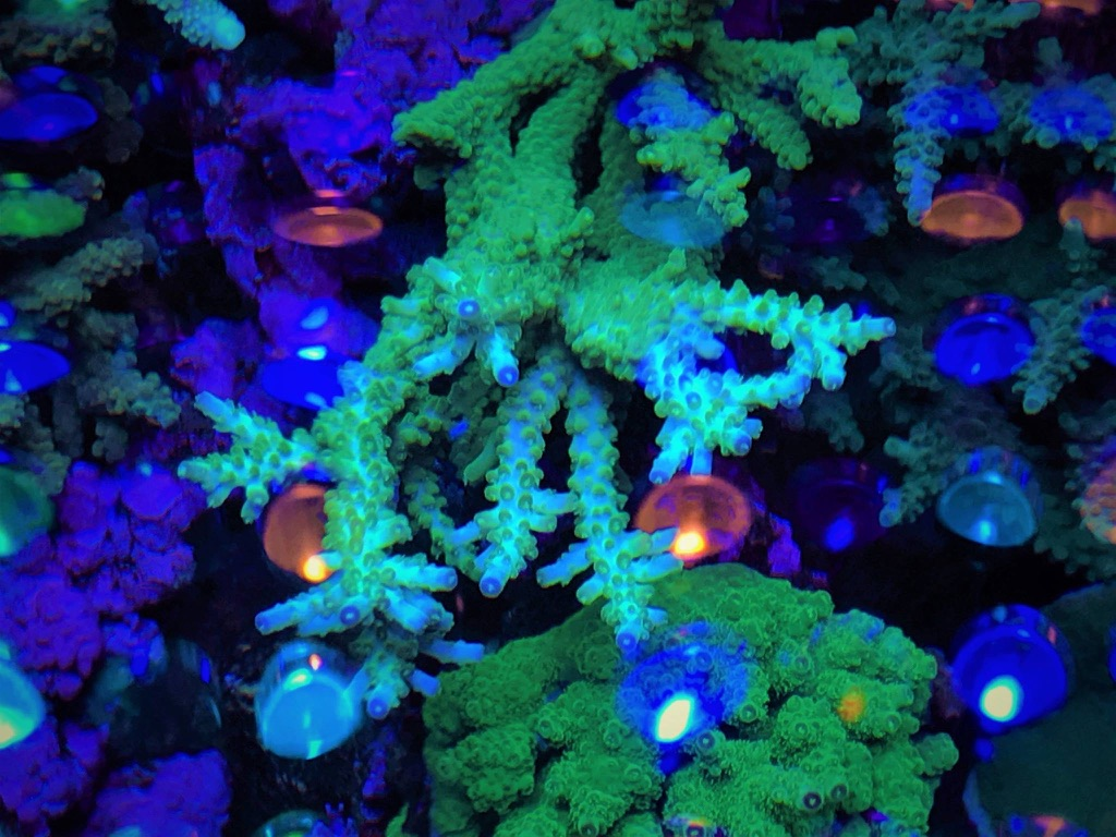 LED Aquarium lighting Orphek Atlantik10.jpg