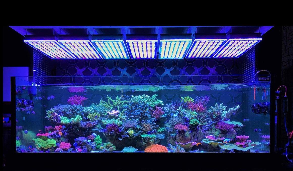 LED Aquarium lighting Orphek Atlantik13.jpg