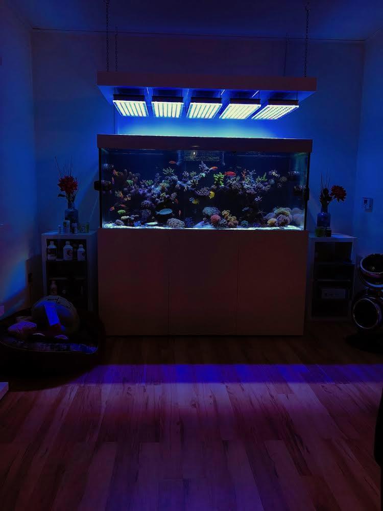 LED Aquarium lighting Orphek Atlantik18.jpg
