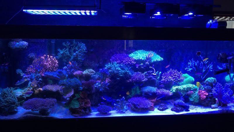 LED Aquarium lighting Orphek Atlantik20.jpg