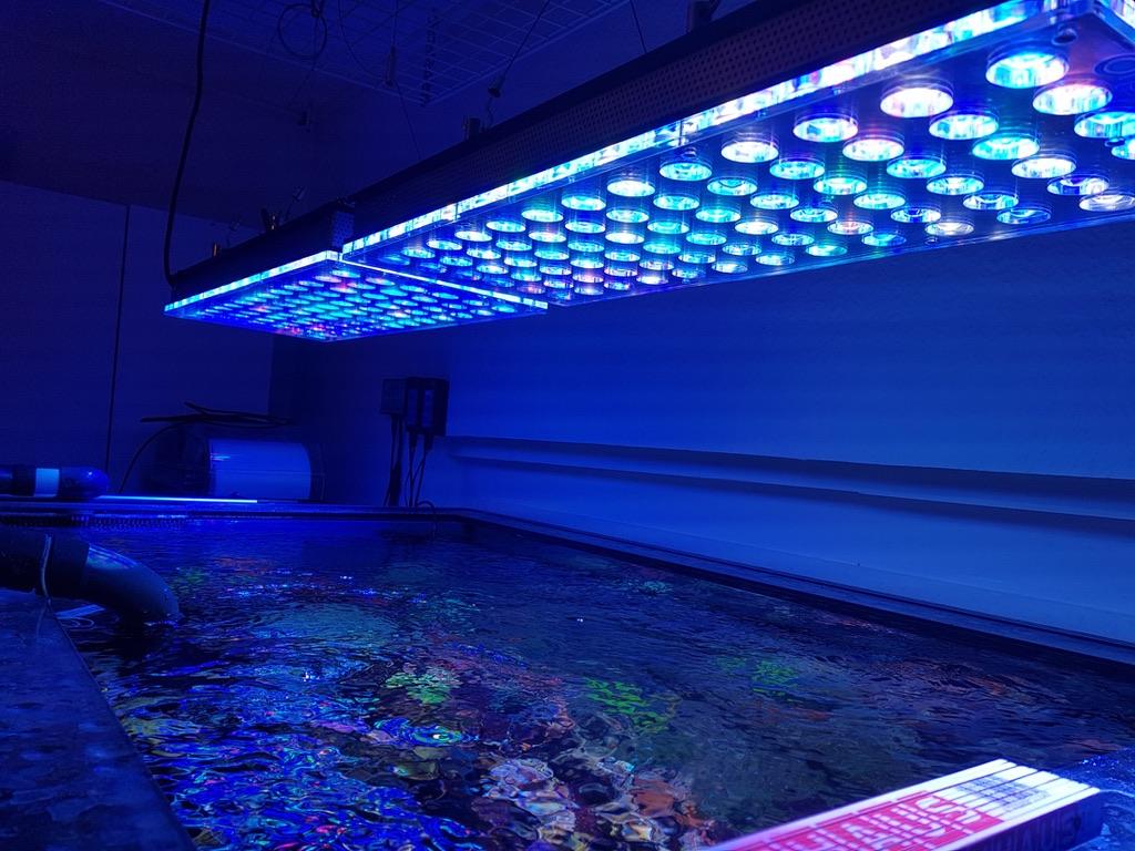LED Aquarium lighting Orphek Atlantik22.jpg