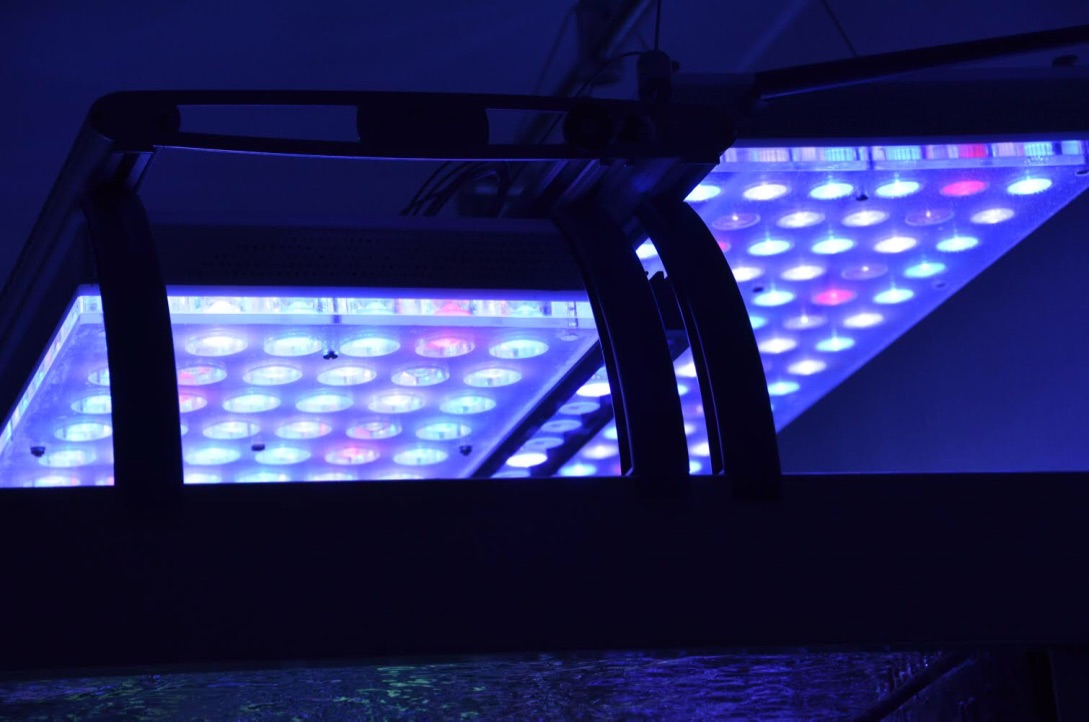 LED Aquarium lighting Orphek Atlantik24.jpg