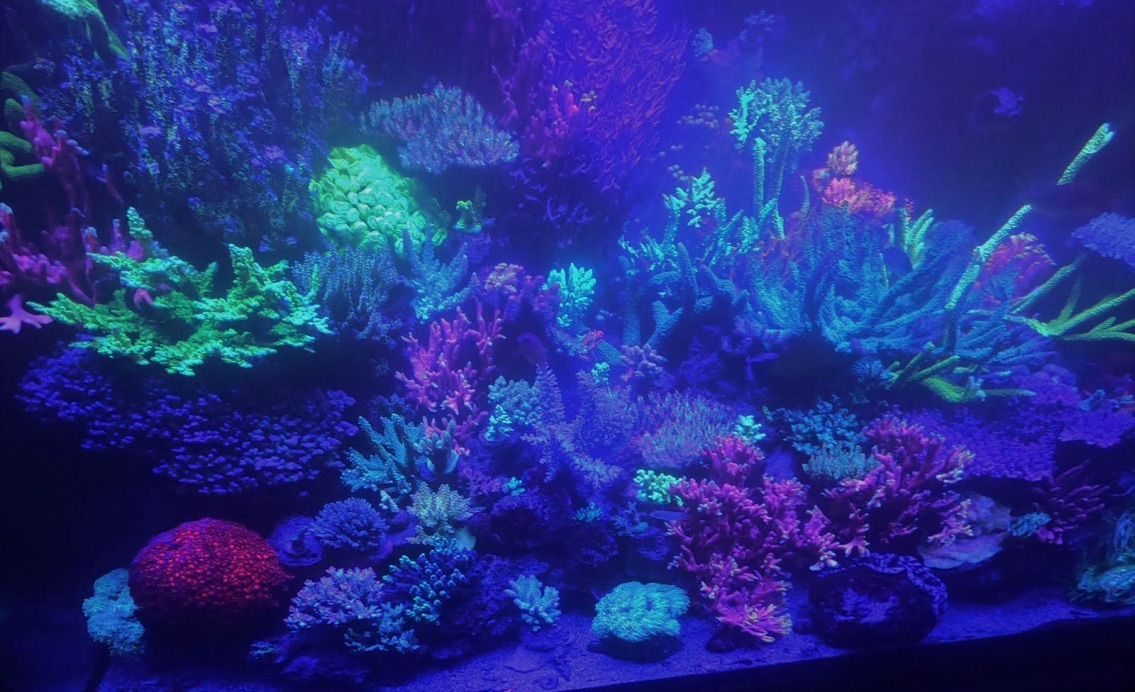 LED Aquarium lighting Orphek Atlantik25.jpg