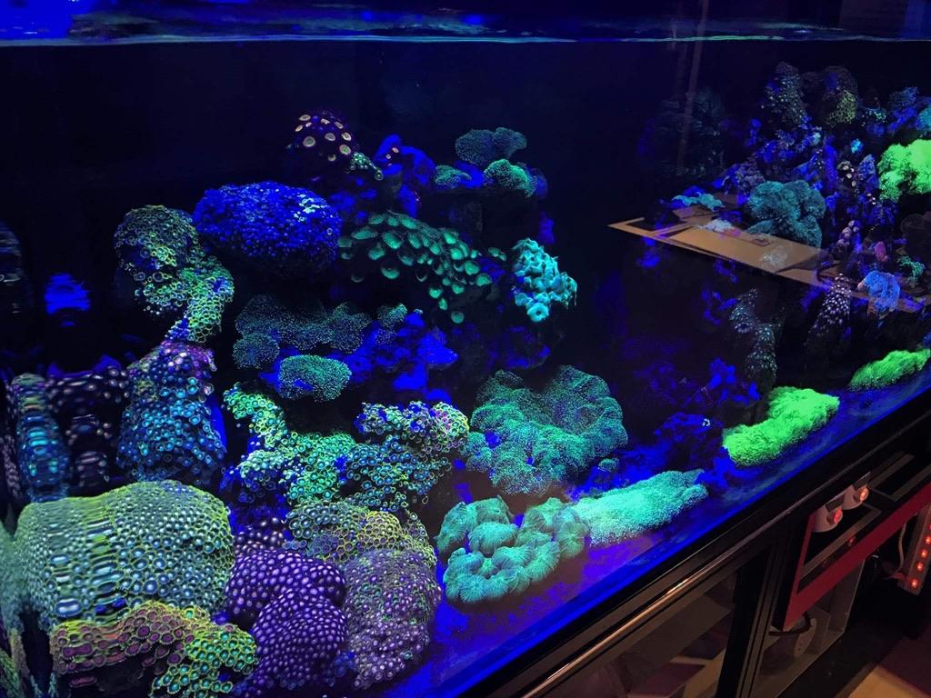LED Aquarium lighting Orphek Atlantik26.jpg