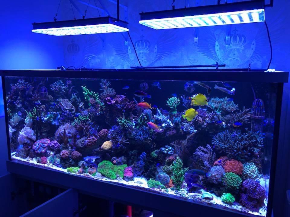 LED Aquarium lighting Orphek Atlantik28.jpg