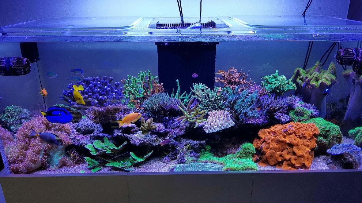 LED Aquarium lighting Orphek Atlantik29.jpg