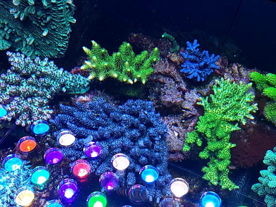 LED Aquarium lighting Orphek Atlantik30.jpg