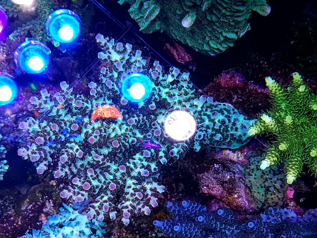 LED Aquarium lighting Orphek Atlantik31.jpg