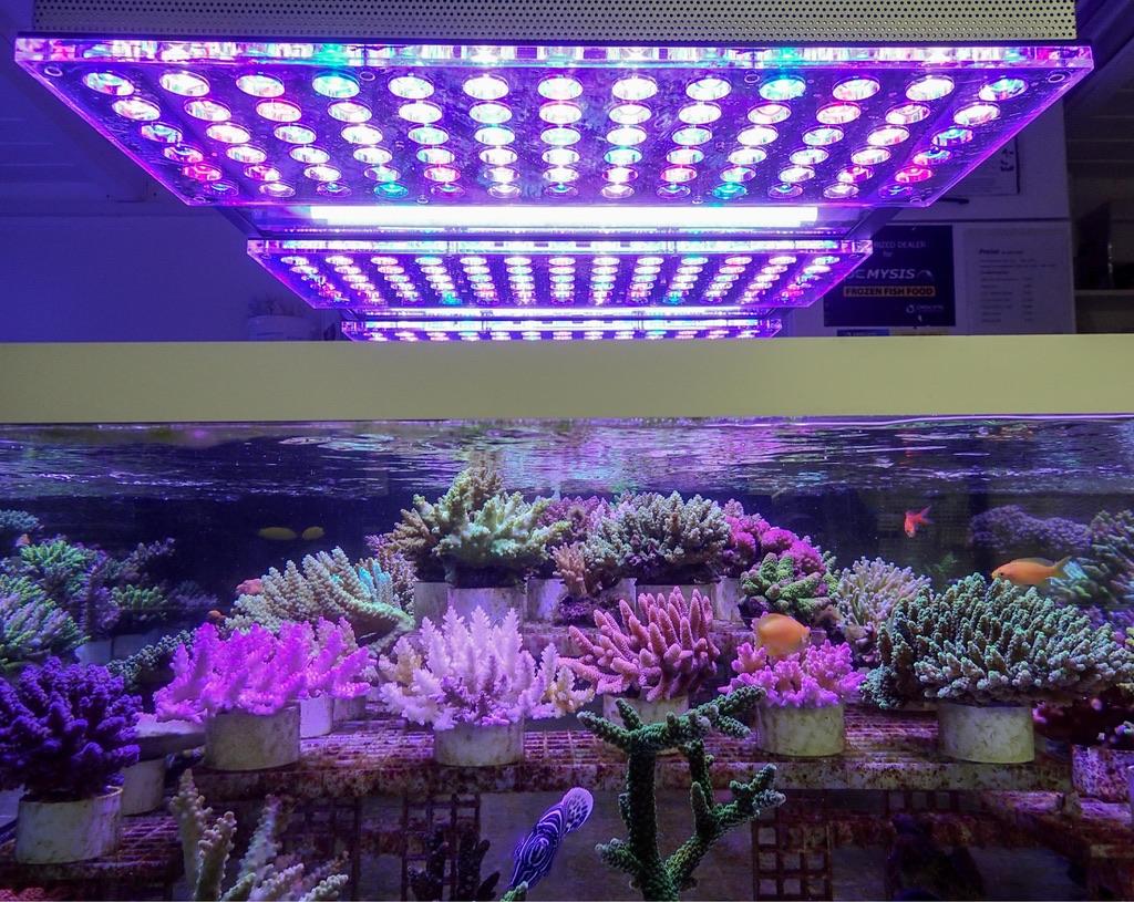 LED Aquarium lighting Orphek Atlantik33.jpg