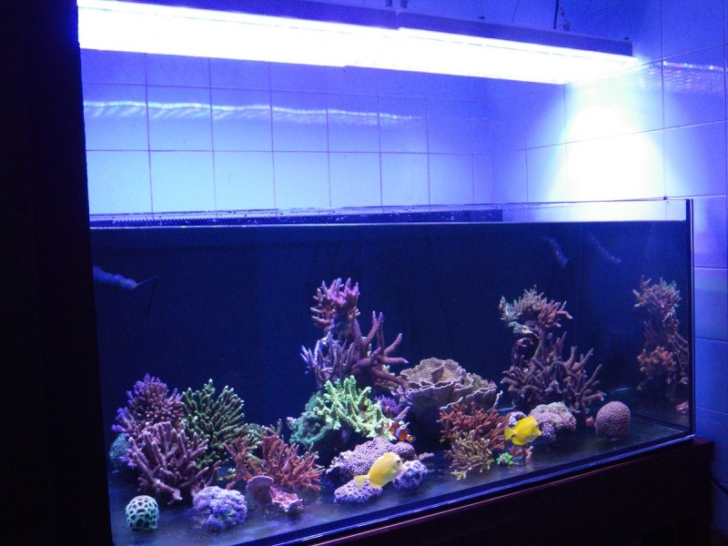 LED Aquarium lighting Orphek Atlantik35.jpg