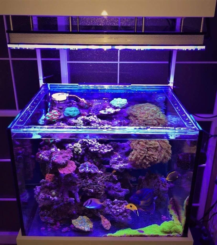 LED Aquarium lighting Orphek Atlantik36.jpg