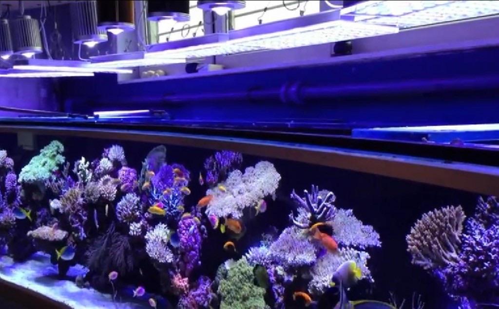 LED Aquarium lighting Orphek Atlantik39.jpg