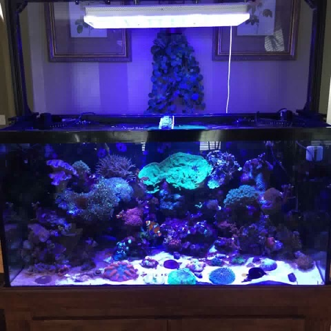 LED Aquarium lighting Orphek Atlantik40.jpg