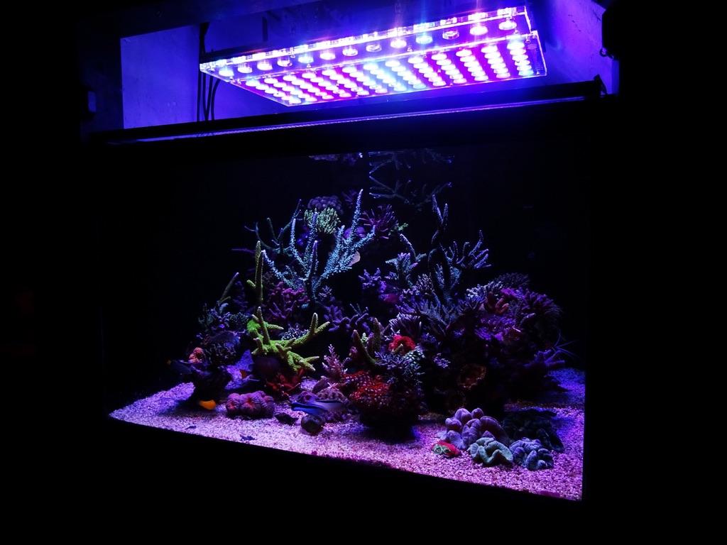 LED Aquarium lighting Orphek Atlantik41.jpg