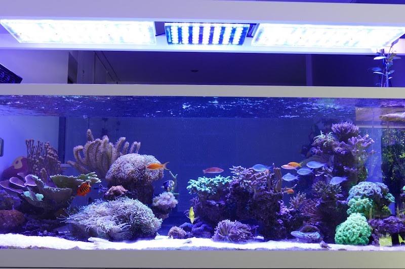 LED Aquarium lighting Orphek Atlantik43.jpg