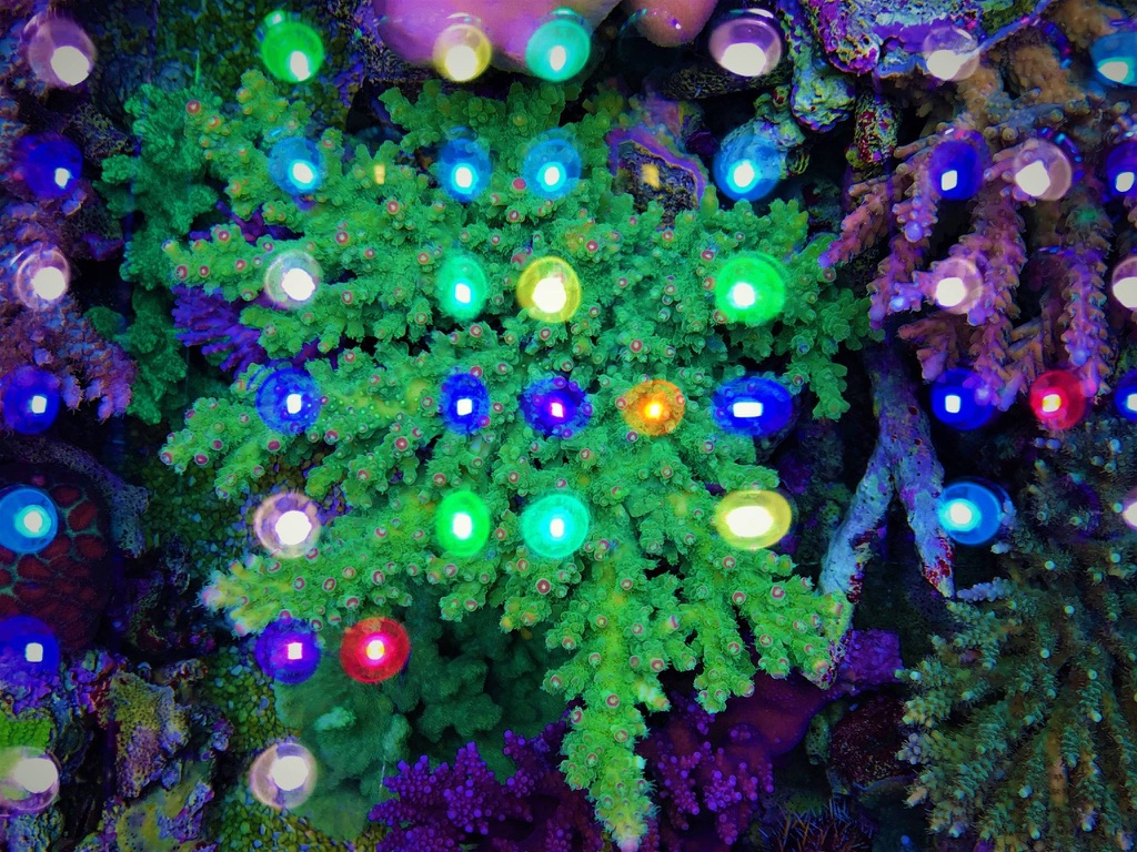 LED Aquarium lighting Orphek Atlantik46.jpg