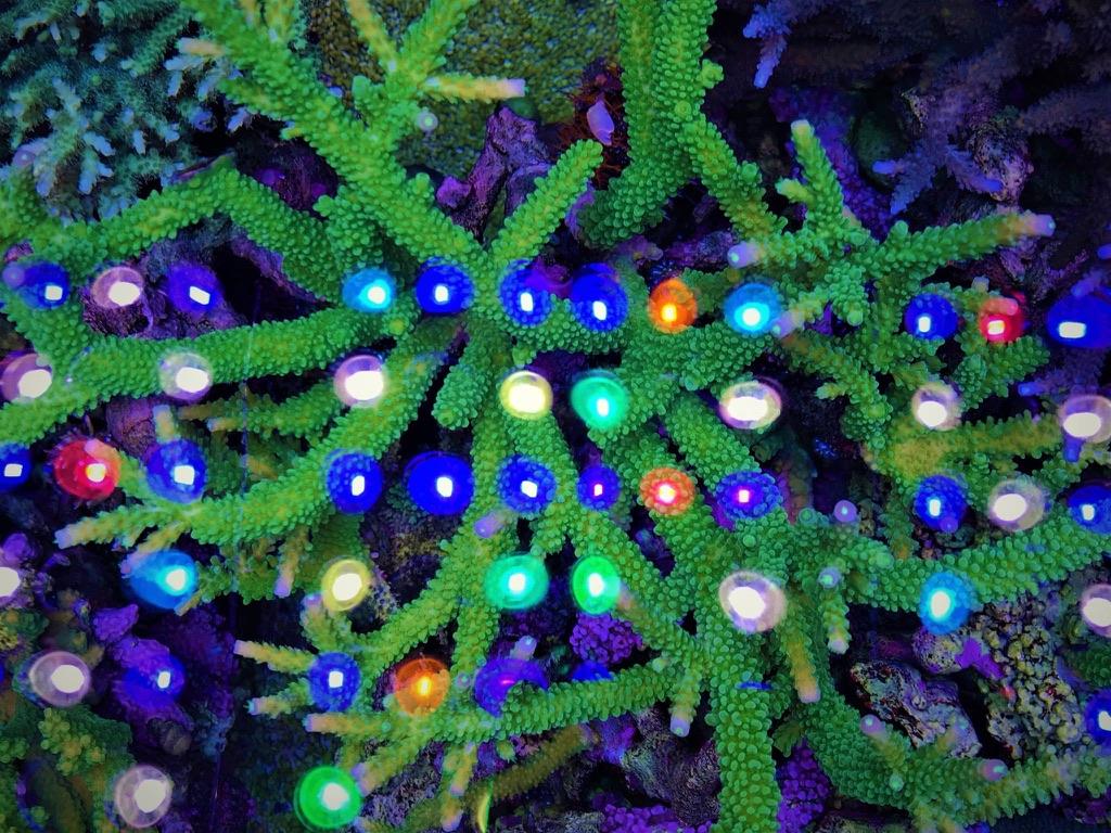 LED Aquarium lighting Orphek Atlantik47.jpg