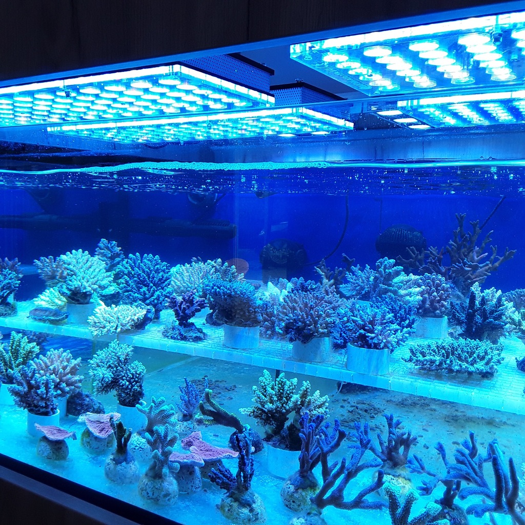 LED Aquarium lighting Orphek Atlantik48.jpg