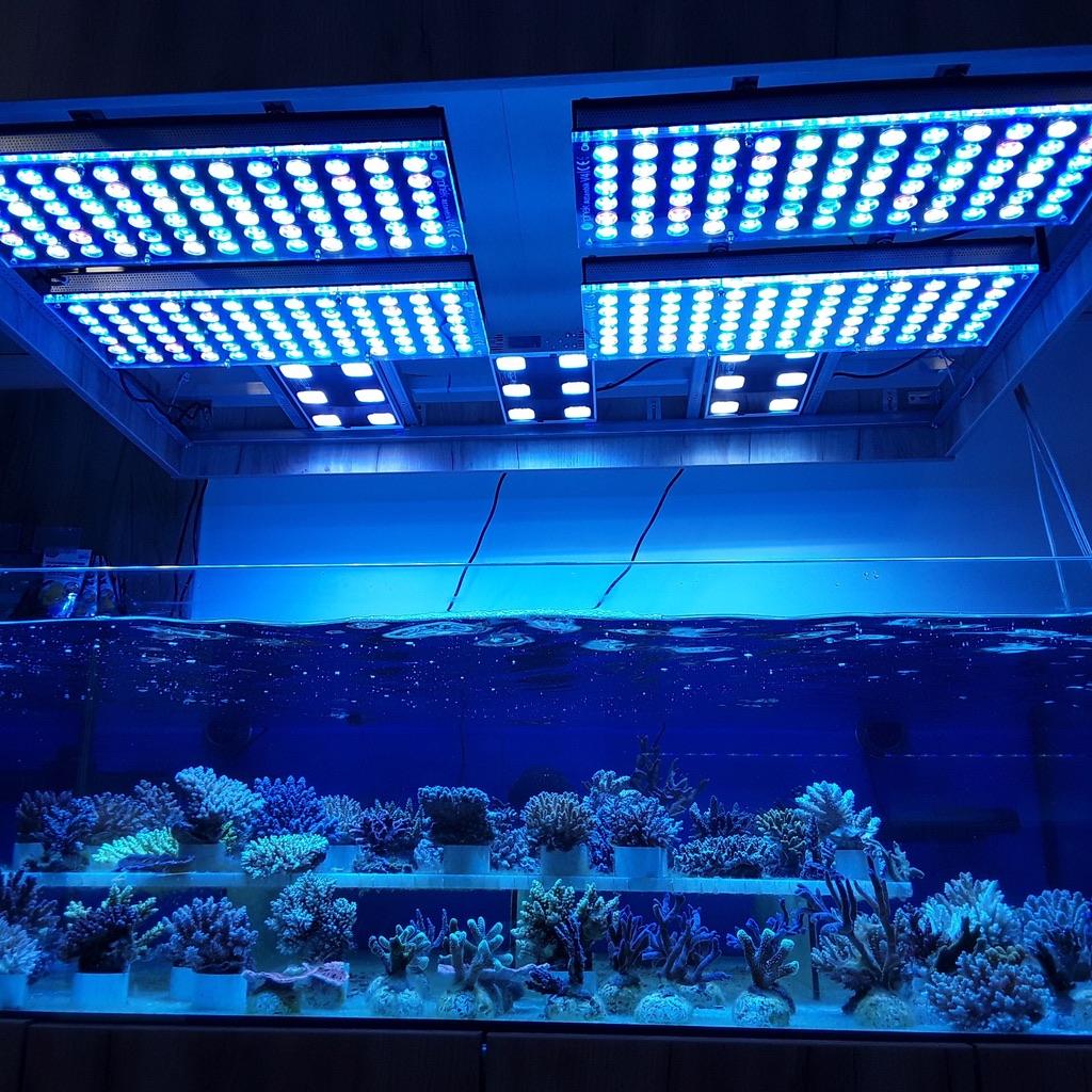 LED Aquarium lighting Orphek Atlantik49.jpg