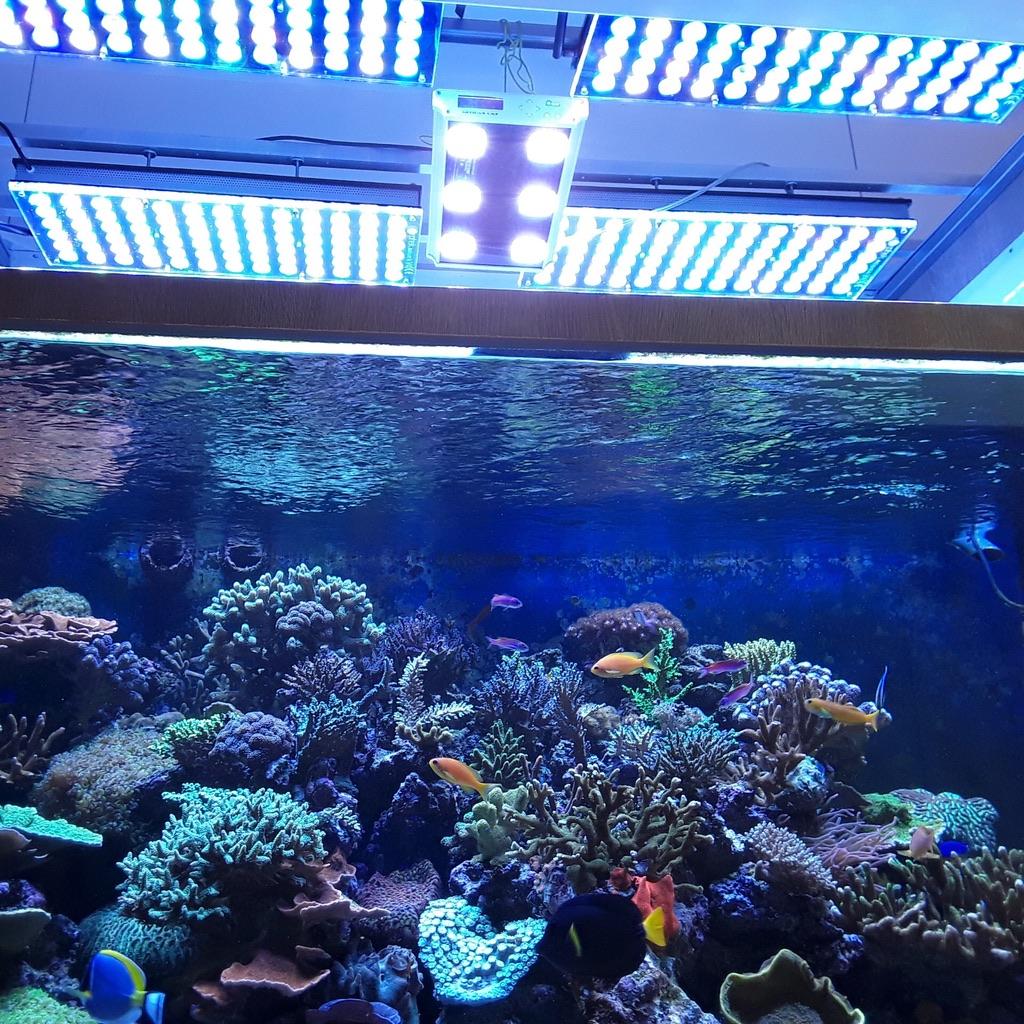 LED Aquarium lighting Orphek Atlantik50.jpg