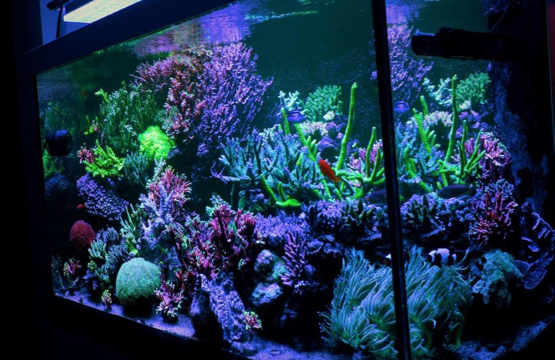 LED Aquarium lighting Orphek Atlantik53.jpg