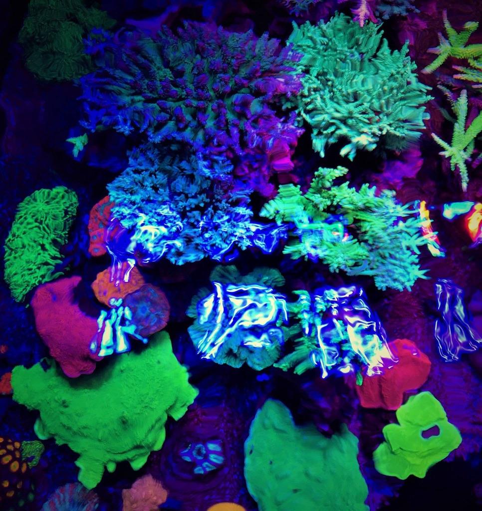 LED Aquarium lighting Orphek Atlantik54.jpg