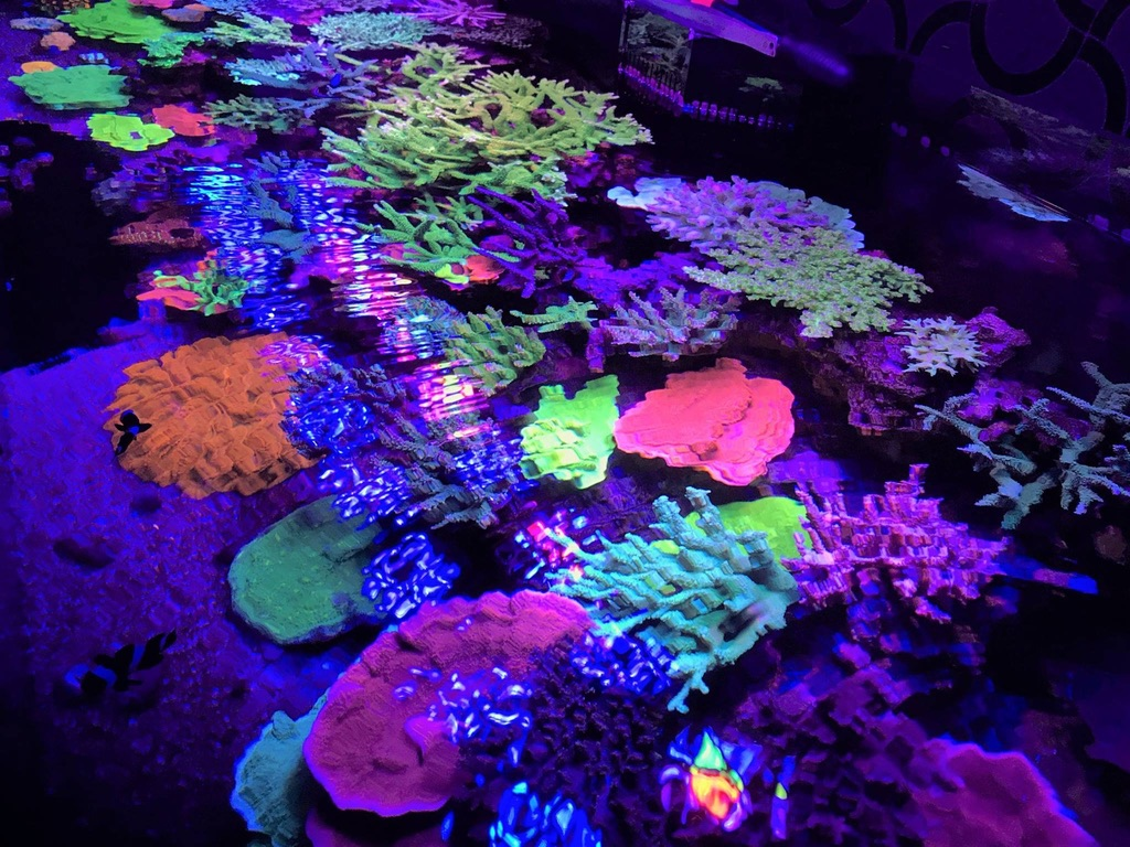 LED Aquarium lighting Orphek Atlantik55.jpg