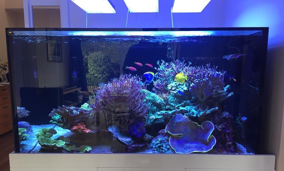 LED Aquarium lighting Orphek Atlantik58.jpg