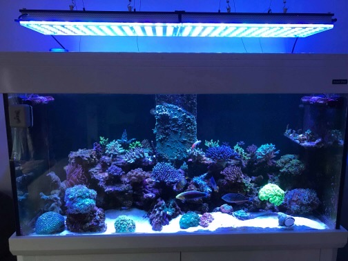 LED Aquarium lighting Orphek Atlantik63.jpg