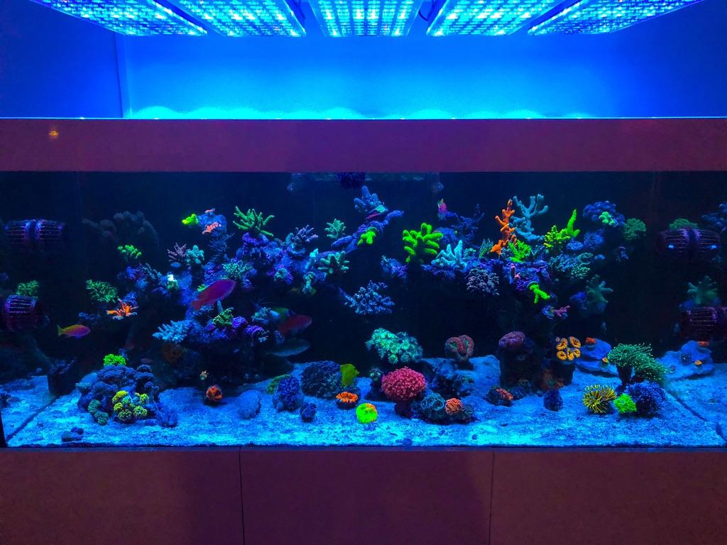 LED Aquarium lighting Orphek Atlantik68.jpg