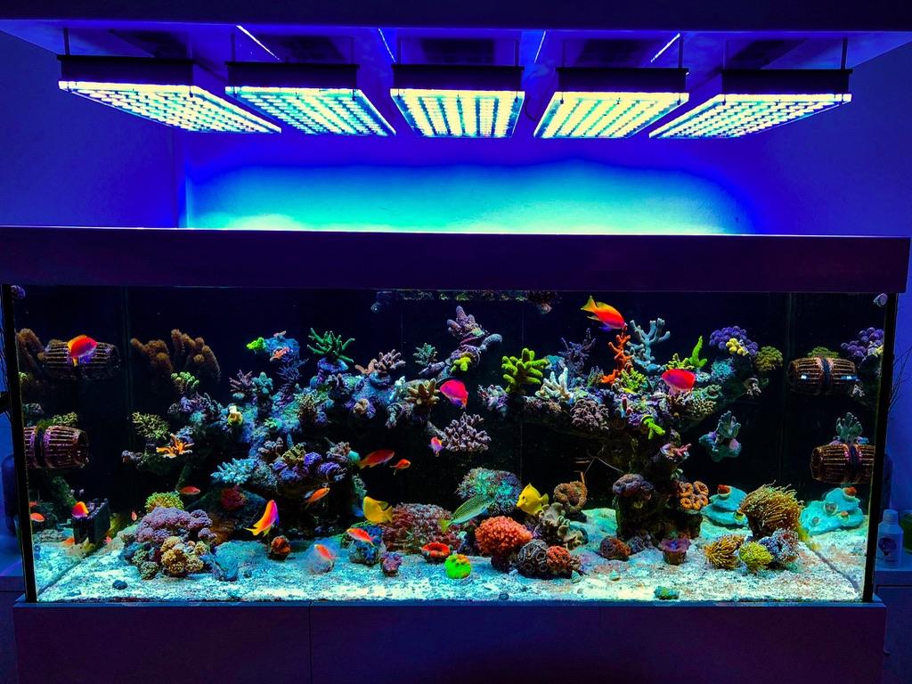 LED Aquarium lighting Orphek Atlantik69.jpg