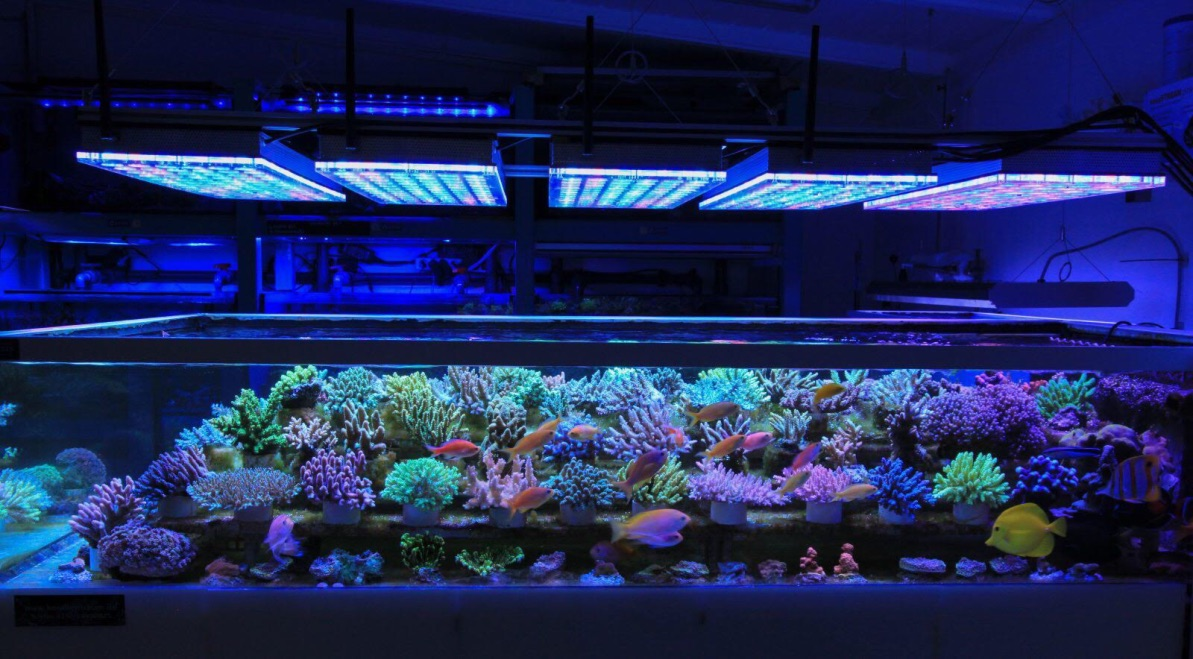 LED Aquarium lighting Orphek Atlantik70.jpg
