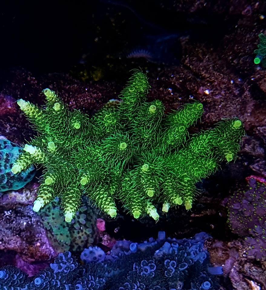 LED Aquarium lighting Orphek Atlantik73.jpg