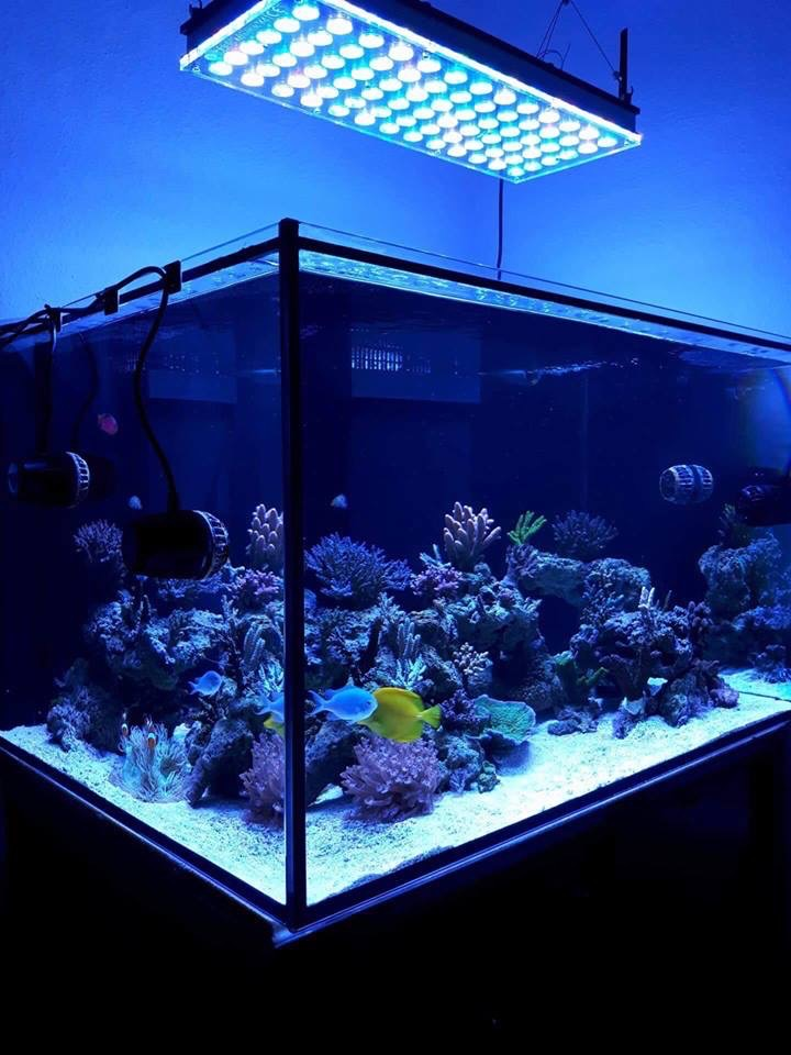 LED Aquarium lighting Orphek Atlantik75.jpg