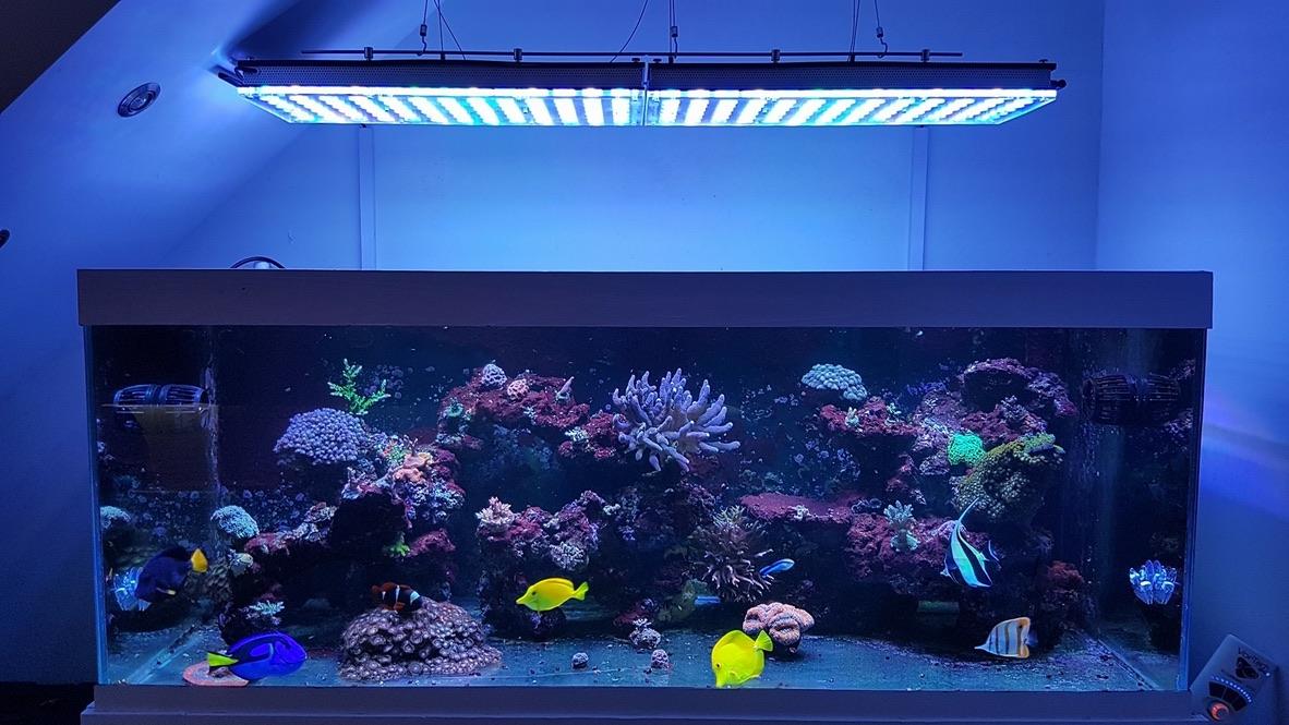 LED Aquarium lighting Orphek Atlantik77.jpg