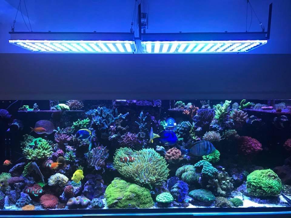 LED Aquarium lighting Orphek Atlantik78.jpg