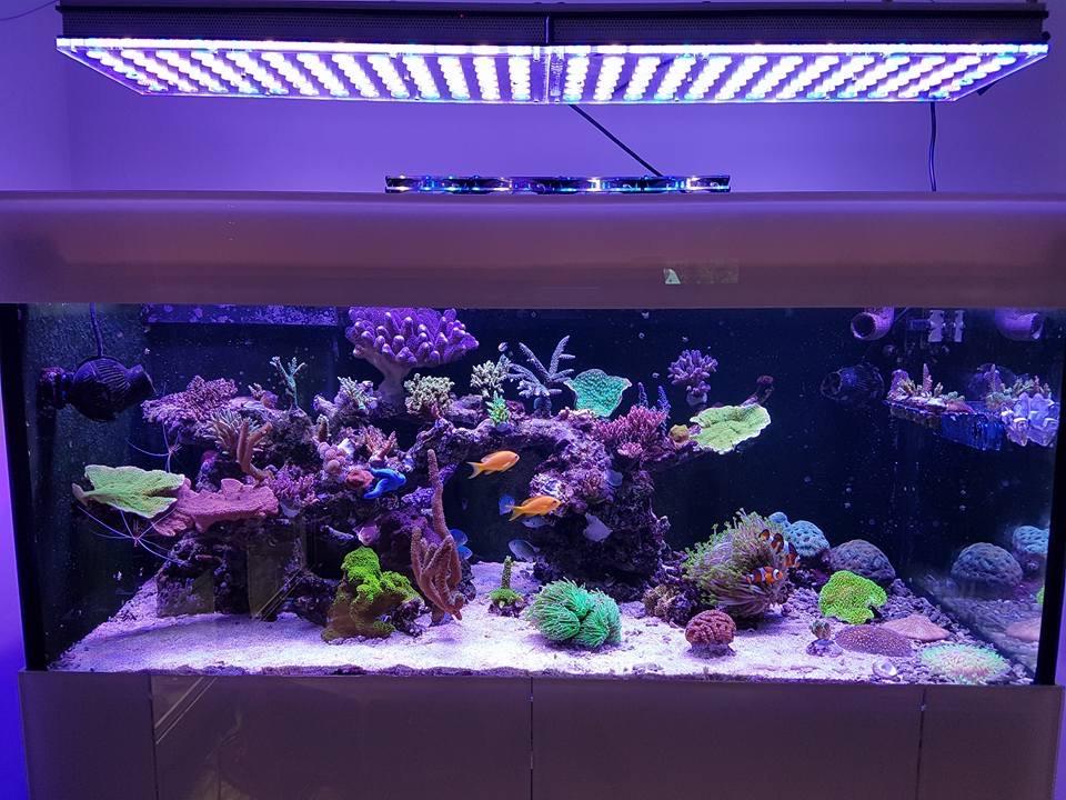 LED Aquarium lighting Orphek Atlantik79.jpg