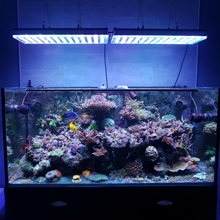 LED Aquarium lighting Orphek Atlantik82.jpg