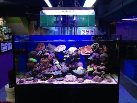LED Aquarium lighting Orphek Atlantik85.jpg