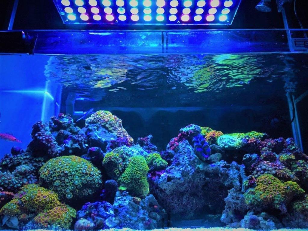 LED Aquarium lighting Orphek Atlantik86.jpg