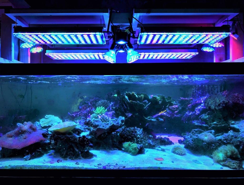 LED Aquarium lighting Orphek Atlantik87.jpg