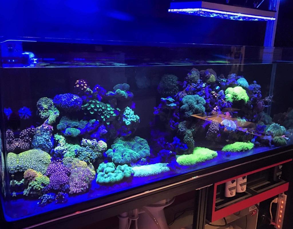 LED Aquarium lighting Orphek Atlantik88.jpg