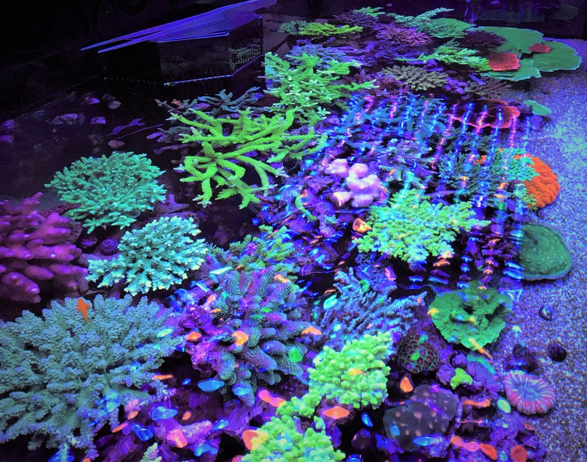 LED-Aquarium-Lighting-Orphek00029.jpg