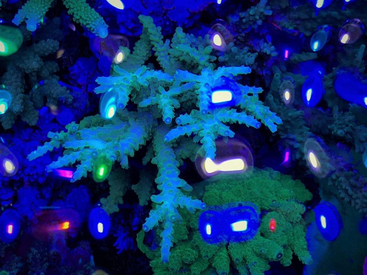 LED-Aquarium-Lighting-Orphek00043.jpg