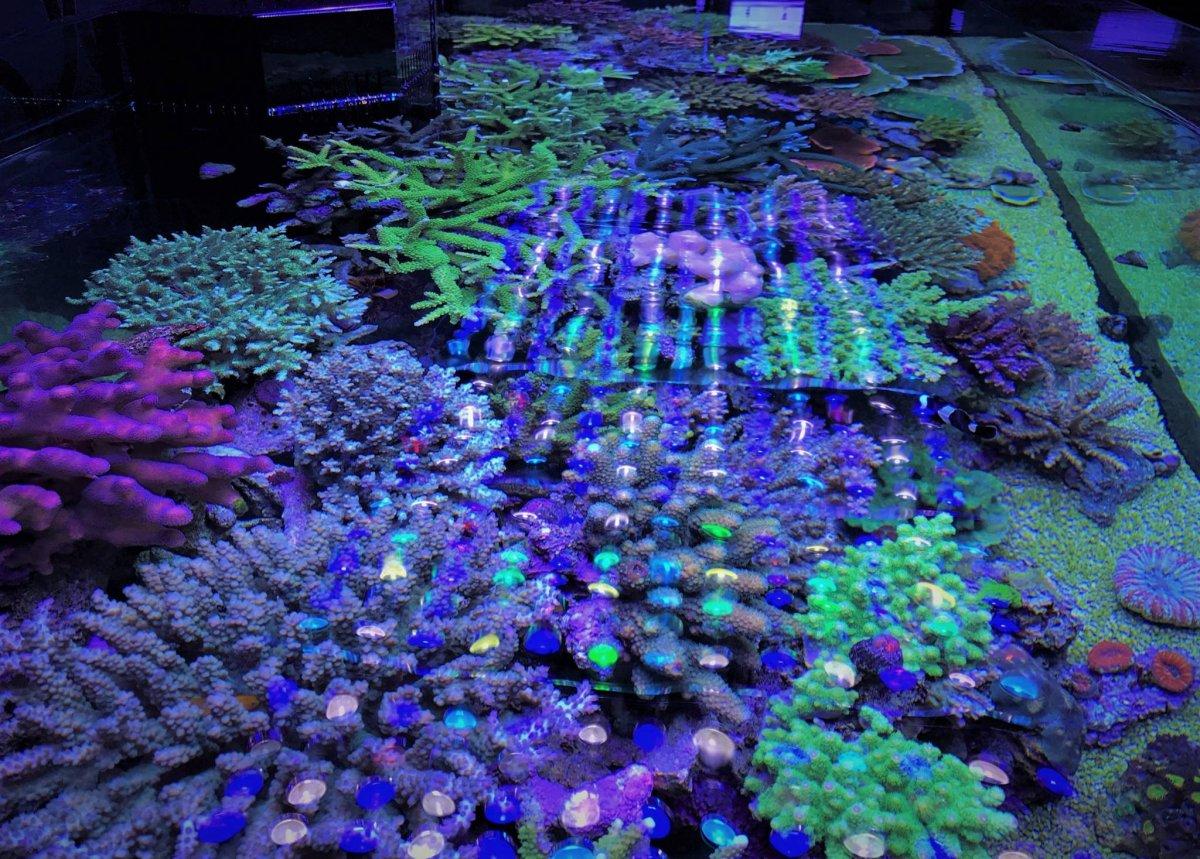 LED-Aquarium-Lighting-Orphek00046.jpg