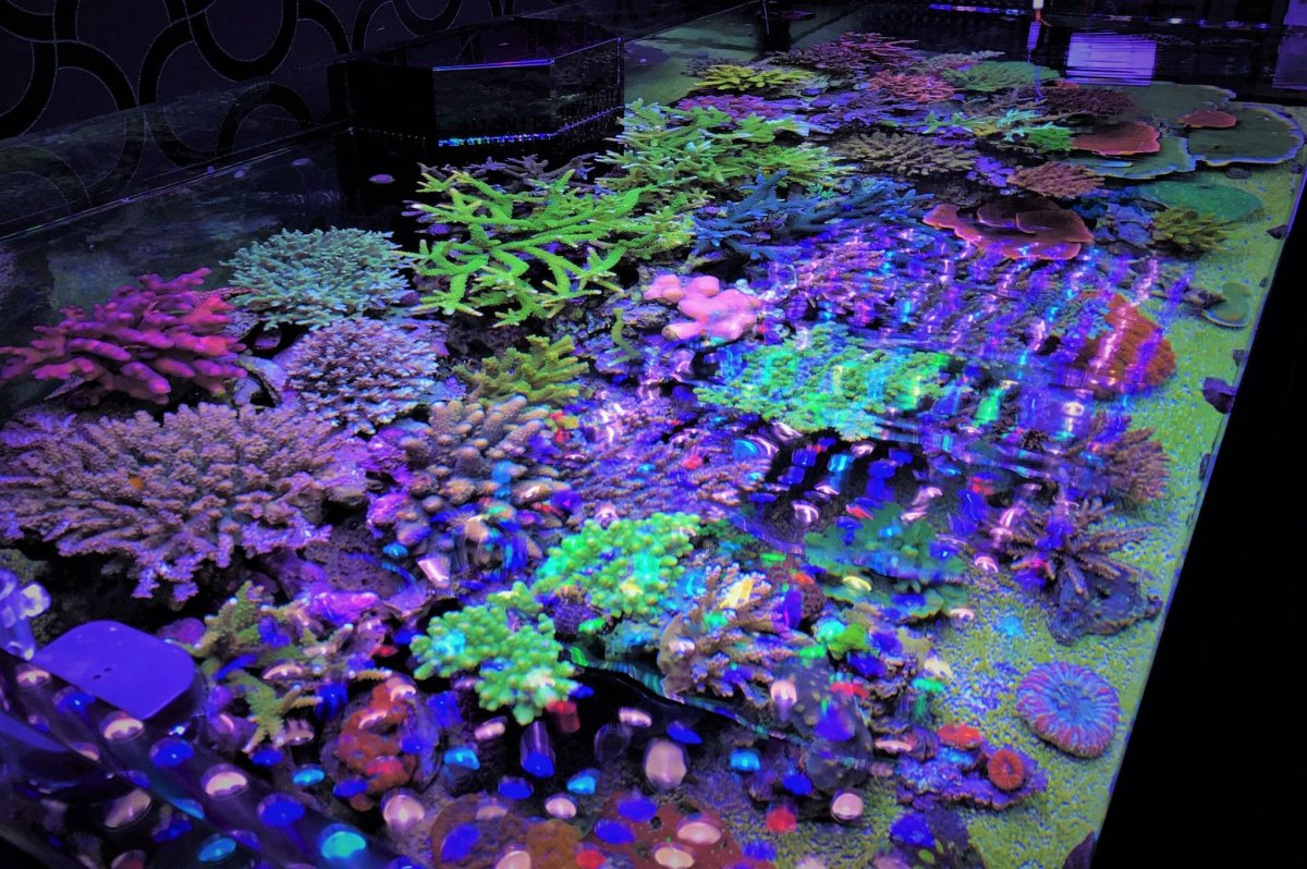LED-Aquarium-Lighting-Orphek00047.jpg