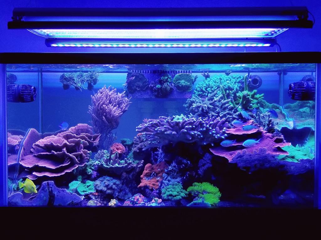LED-light-coral-pop-orphek-1.jpg