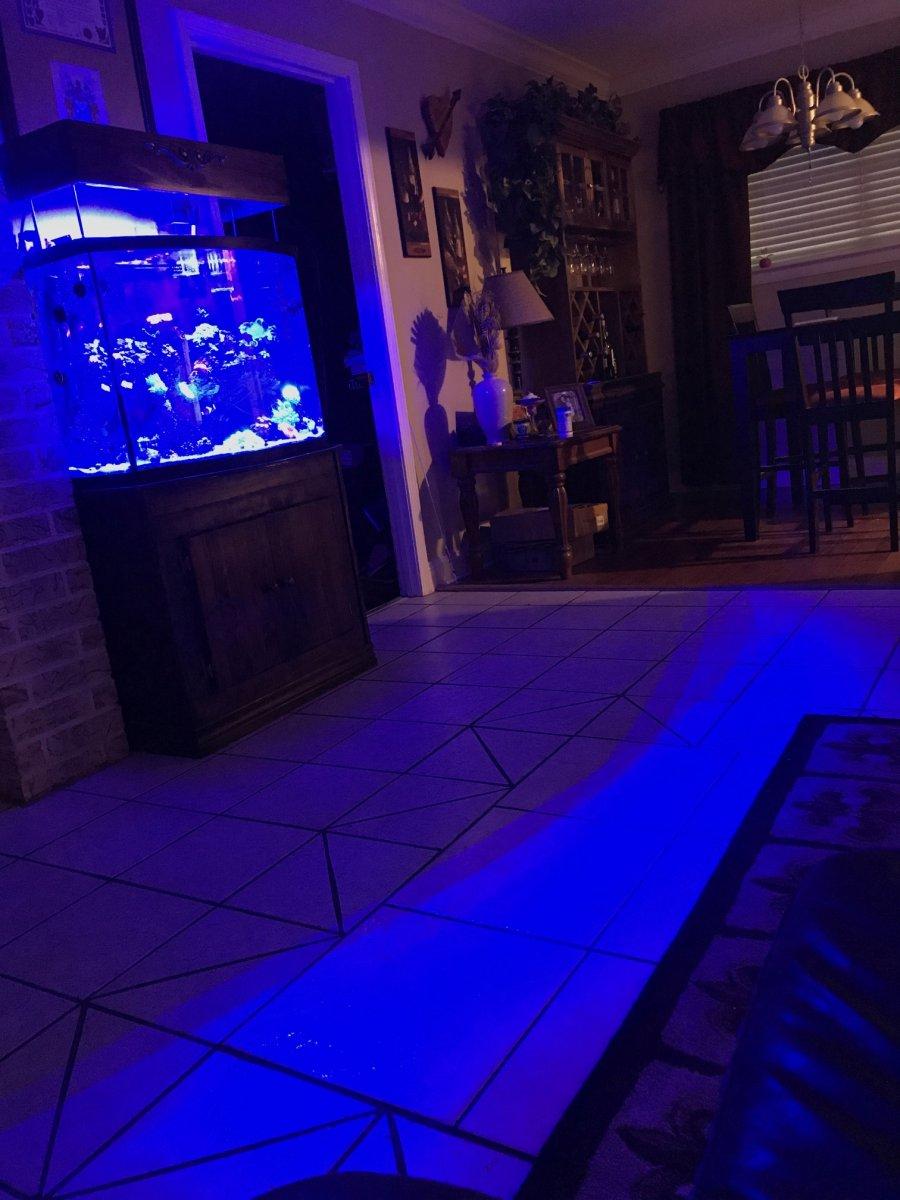 light_blue.jpg